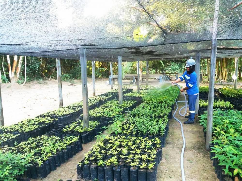 Reflorestamento responsável é chave para proteção das florestas