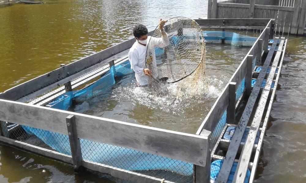 Oriximiná é destaque em congresso internacional com projeto de piscicultura